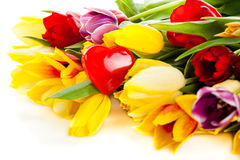Tulips isolated on white background. colors flower spring mother day Royalty Free Stock Images