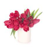 Tulips, isolated on white Stock Photo