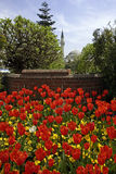 Tulips in Istanbul Stock Photography