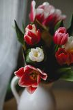 Tulips in a jar. On a table Stock Image