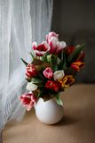 Tulips in a jar. On a table Royalty Free Stock Photography