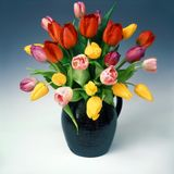 Tulips in jug Royalty Free Stock Photo