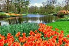 Tulips in Keukenhof Garden Stock Photos