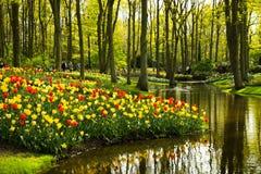 Tulips in Keukenhof park Stock Photography