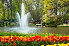 Tulips in Keukenhof park Royalty Free Stock Photo