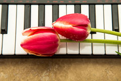 Tulips on keyboard Stock Photos