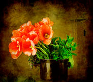 Tulips in the kitchen Stock Images