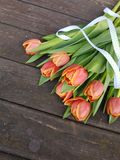Nature, Pretty Tulips laying on a dark wooden background royalty free stock photography