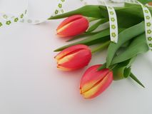 Tulips laying on a white background. Mothers day, Thank you card, Friendship, Love royalty free stock images