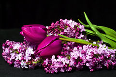 Tulips and Lilacs Royalty Free Stock Images