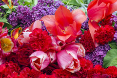 Tulips and lilacs. Stock Photos