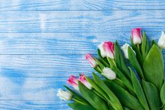 Tulips with macaroons on blue wooden background stock photos