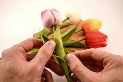 Tulips. Macro photography scene about tulips stock photo