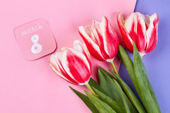 Tulips on 8 March. Stock Photo