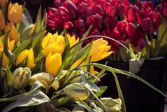 Tulips in the market Stock Photo