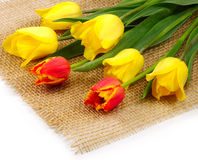 Tulips on the matting Stock Image