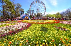 Tulips and merry go round at Floriade Canberra Stock Photo