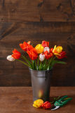 Tulips in metal bucket with clippers Royalty Free Stock Images