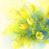 Tulips and mimosa flower watercolor. Yellow tulips and mimosa flower watercolor on blue background. Spring bloom. Easter card royalty free illustration