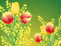 Tulips and mimosa on green background Stock Photography