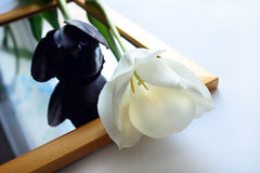 Tulips on mirror. Couple white and black tulips on mirror royalty free stock image