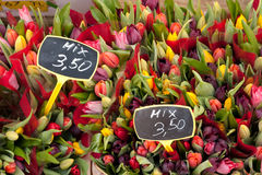 Tulips Mix on Albert Cuypmarkt, Amsterdam Stock Images