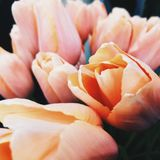 Tulips are the most spring flowers stock image