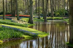 Brightly coloured tulips and muscari by the lake at Keukenhof Gardens, Lisse, Netherlands. Keukenhof is known as the Garden of