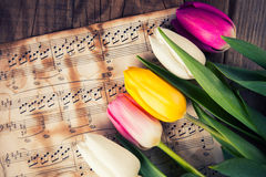 Tulips on a music notes paper Stock Photo