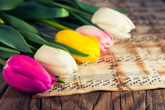 Tulips on a music notes paper Stock Images
