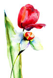 Tulips and Narcissus flowers Stock Photos
