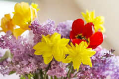 Tulips,narcissus and lilac  flowers-close up Stock Photo