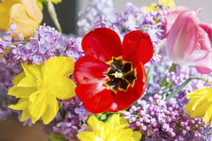 Tulips,narcissus and lilac  flowers-close up Royalty Free Stock Images