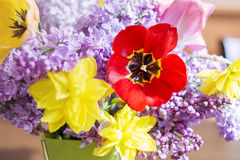 Tulips,narcissus and lilac  flowers-close up Stock Photography