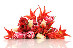 Tulips no branco Fotografia de Stock Royalty Free