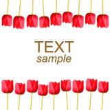 Tulips no branco com texto da amostra Foto de Stock Royalty Free