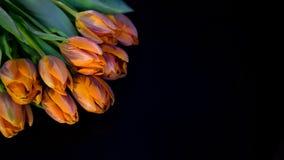 Tulips no preto Imagens de Stock