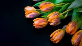 Tulips no preto Foto de Stock