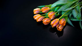 Tulips no preto Fotografia de Stock