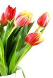 Tulips no vaso fotografia de stock