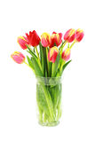 Tulips no vaso imagens de stock