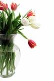 Tulips no vaso Fotos de Stock Royalty Free