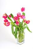 Tulips no vaso Fotos de Stock