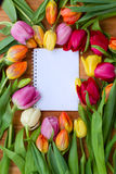 Tulips with notebook Royalty Free Stock Images