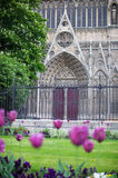 Tulips in Notre Dame Royalty Free Stock Photography