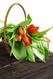Tulips in old basket Stock Image