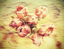 Tulips, old paper grunge postcard effect Royalty Free Stock Images