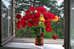 Free Tulips On Windowsill. Stock Photography - 14374192