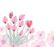 Tulips original watercolor painting Royalty Free Stock Photo