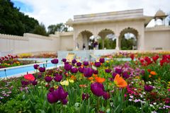 Tulips and other colorful flowers blooming in the Indian Char Bagh Garden in Hamilton Gardens Stock Photography